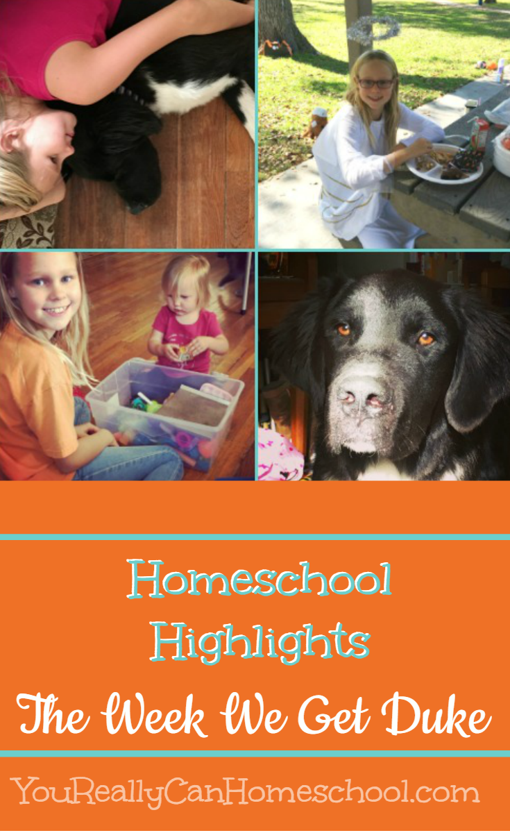 Homeschool Highlights. The week we get duke. YouReallyCanHomeschool.com